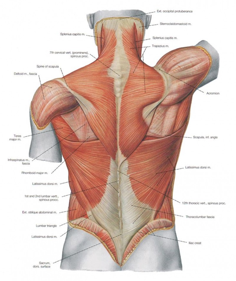 The Definitive Guide that You Never Wanted: Anatomy of a