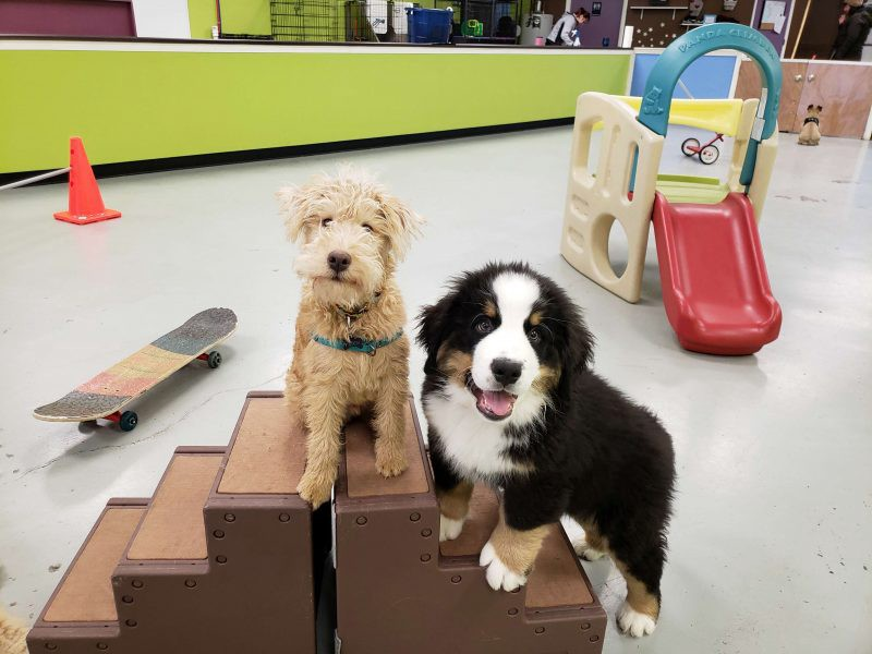 Puppy training near me