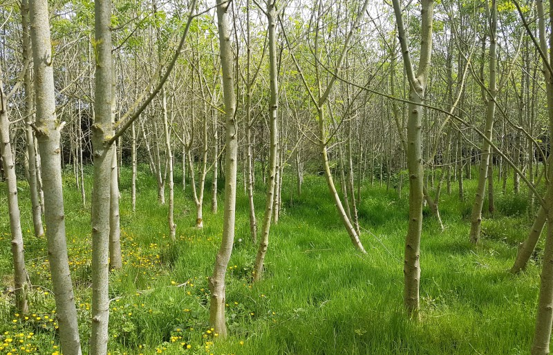 Peaceful woodland space