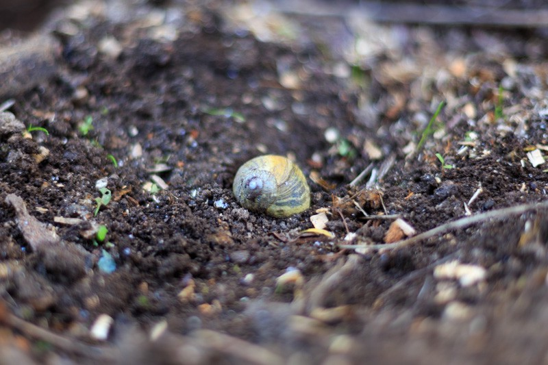 snail shell on a field