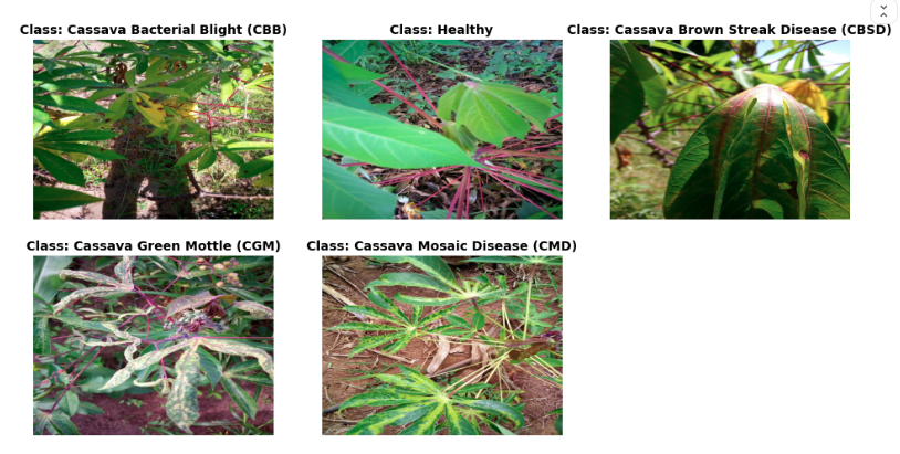 5 images representing cassava plants with 4 different diseases 1 healthy plant