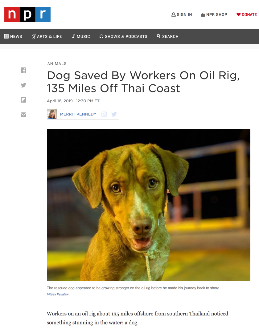 "Screen shot of online NPR article called ""Dog Saved By Workers On Oil Rig, 135 Miles Off Thai Coast."" Written April 16, 2019."