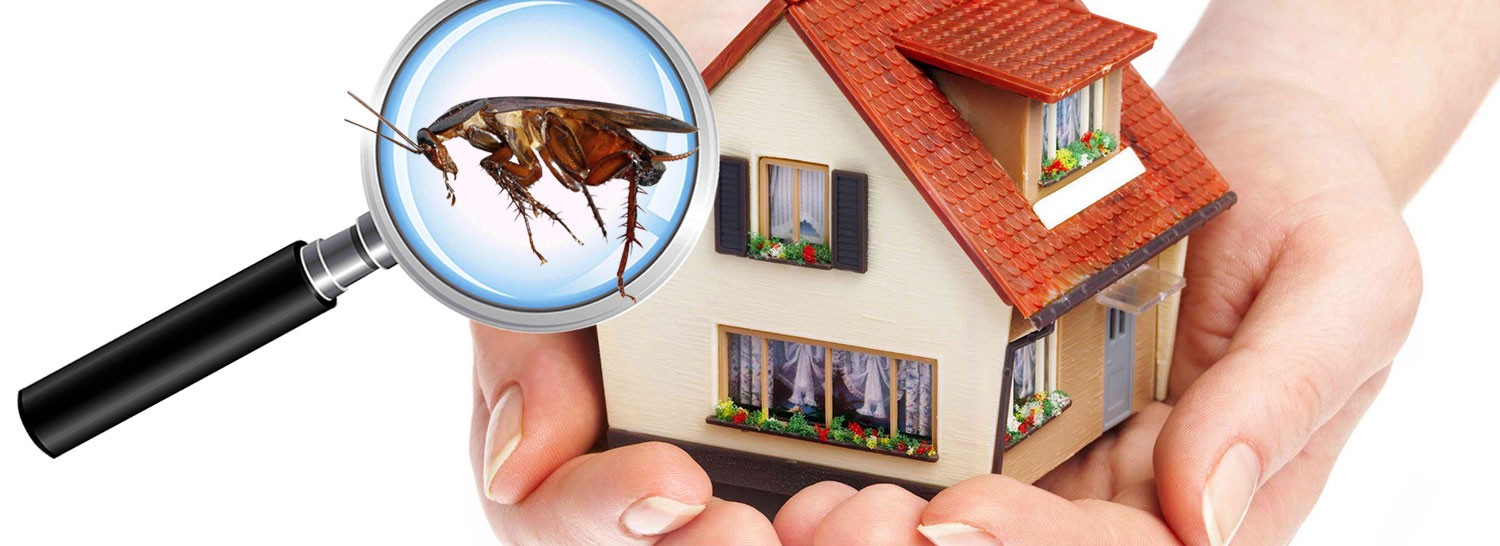 Pest Management — Definition and Significance | by Bayswater Pest ...