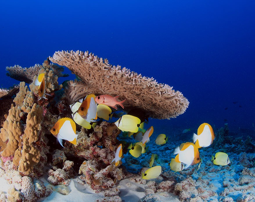 Coral Reefscape French Frigate Shoals