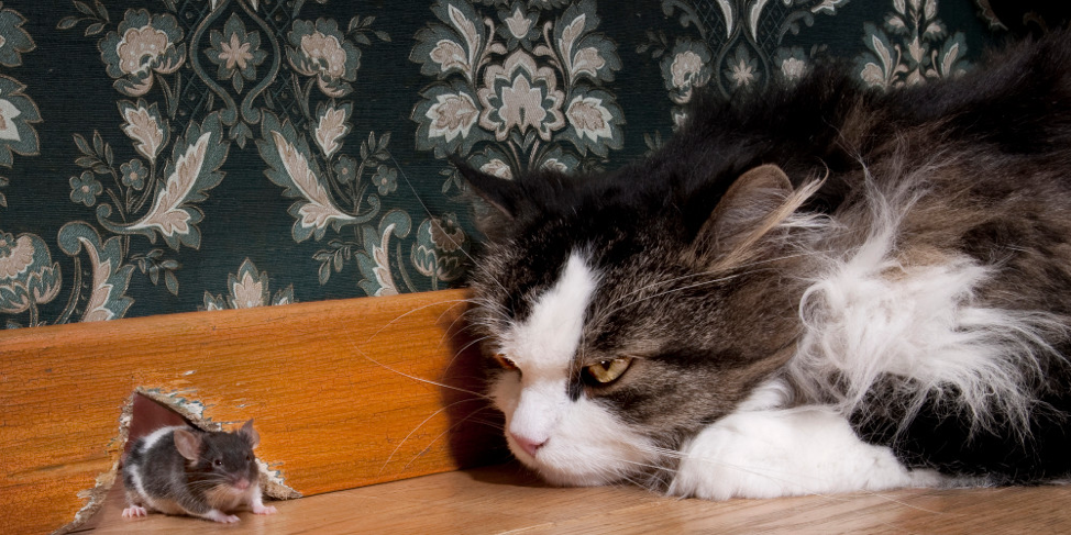The cat-and-mouse story of implementing anti-spam for Mail