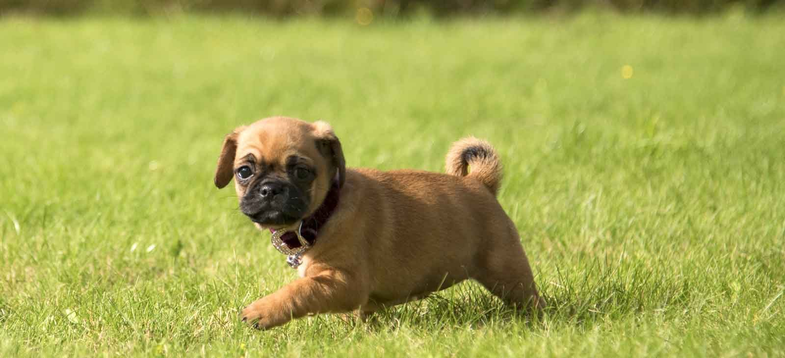 Building Your Dog S Confidence Up For Your New Puppy Through Puppy Training By Wolfkeeper University Medium