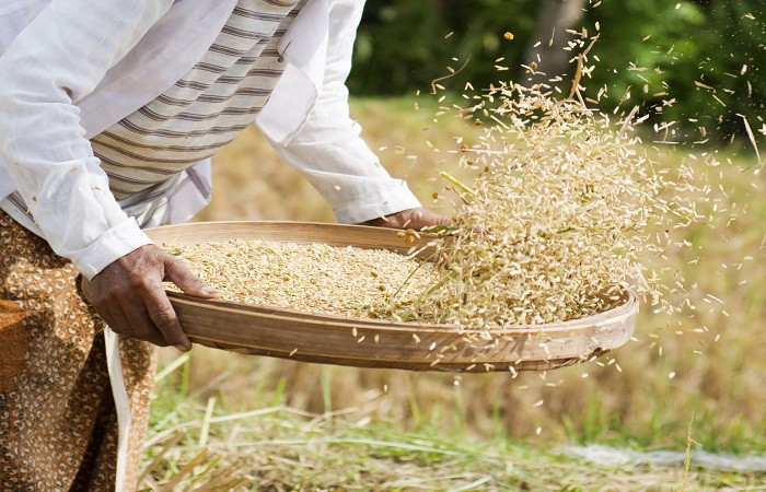 Image result for rice farming in nigeria