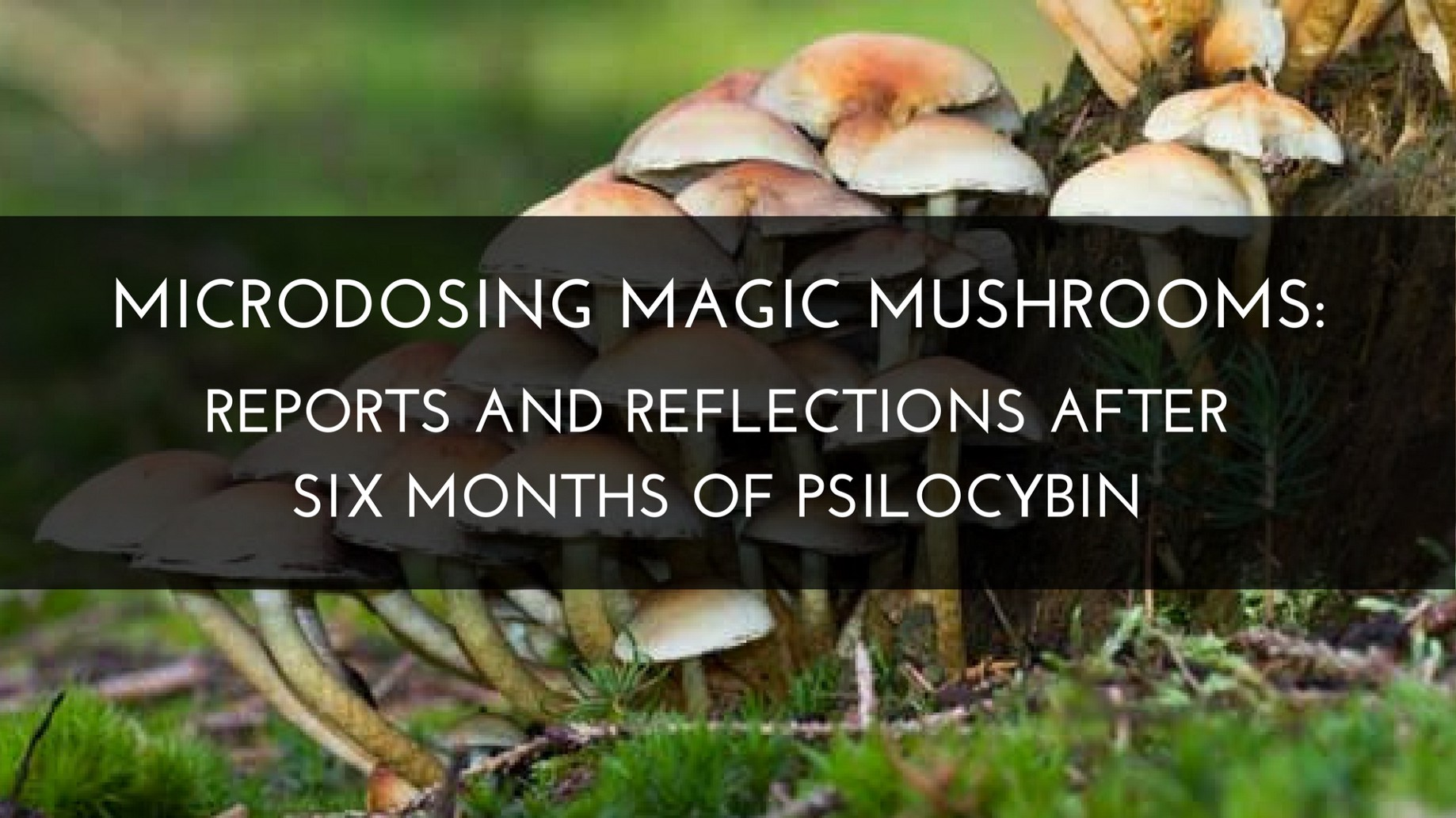 Microdosing Magic Mushrooms: Reports and Reflections after Six