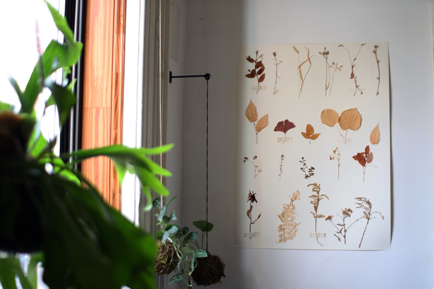 How To Make A Herbarium