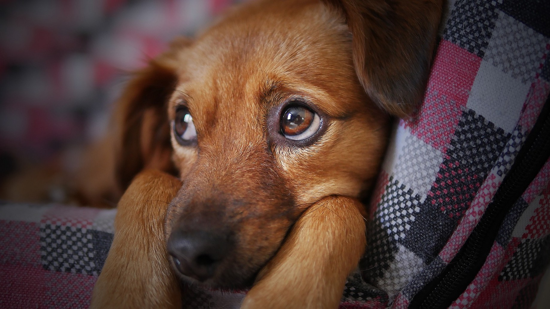 The Puppy Who Loved Cheese - Lauren Havens - Medium