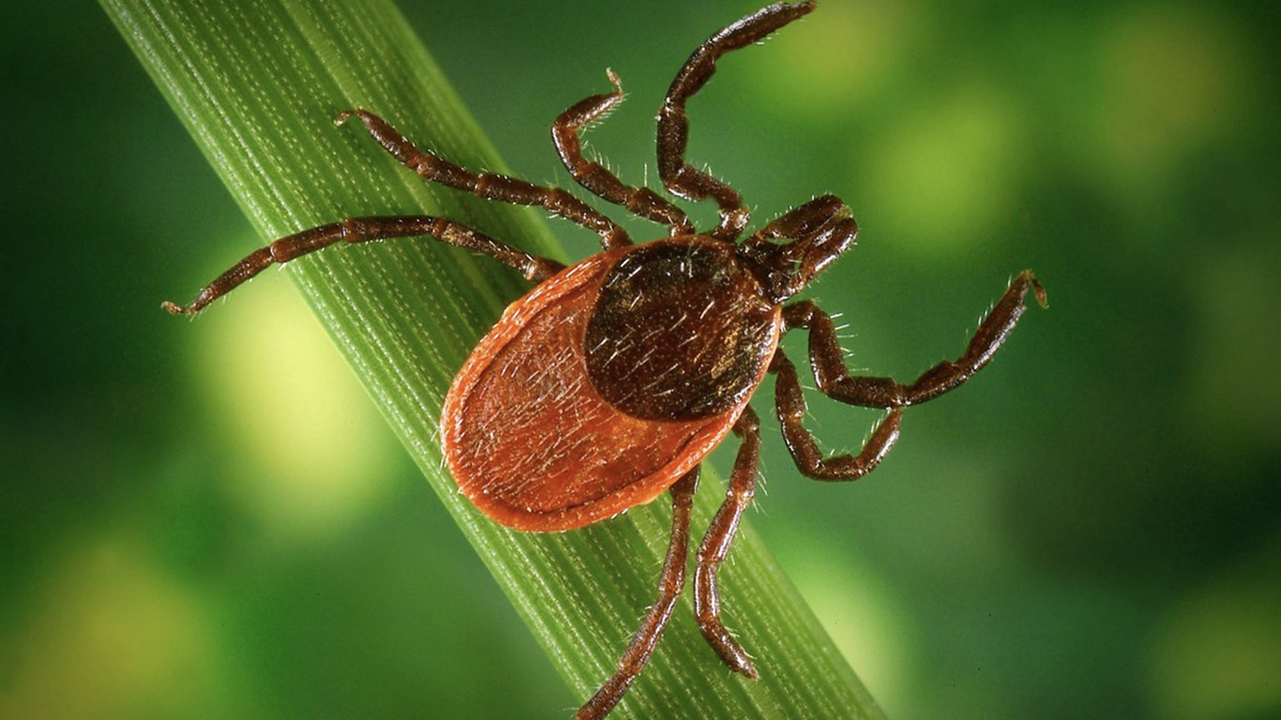 Hacking Chronic Lyme Disease and Co-Infections - Trent Lapinski - Medium