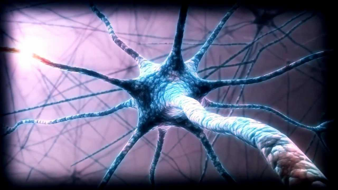 Biocentricism: How Life and Consciousness Are the Keys to