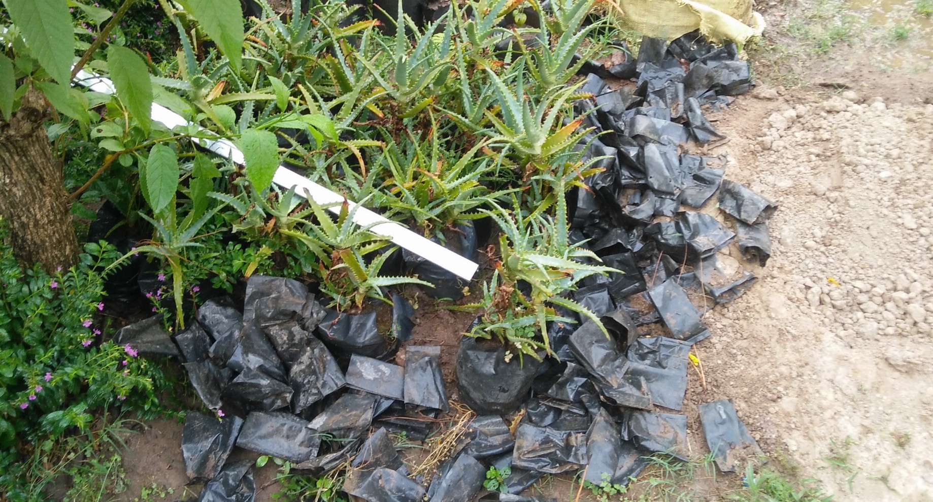 How to replace plastic with cow poop in 6 steps? - Stories from