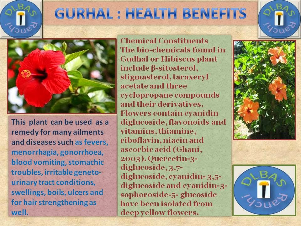 Benefits Of Gudhal Flower Ayurvedic Treatment Medium