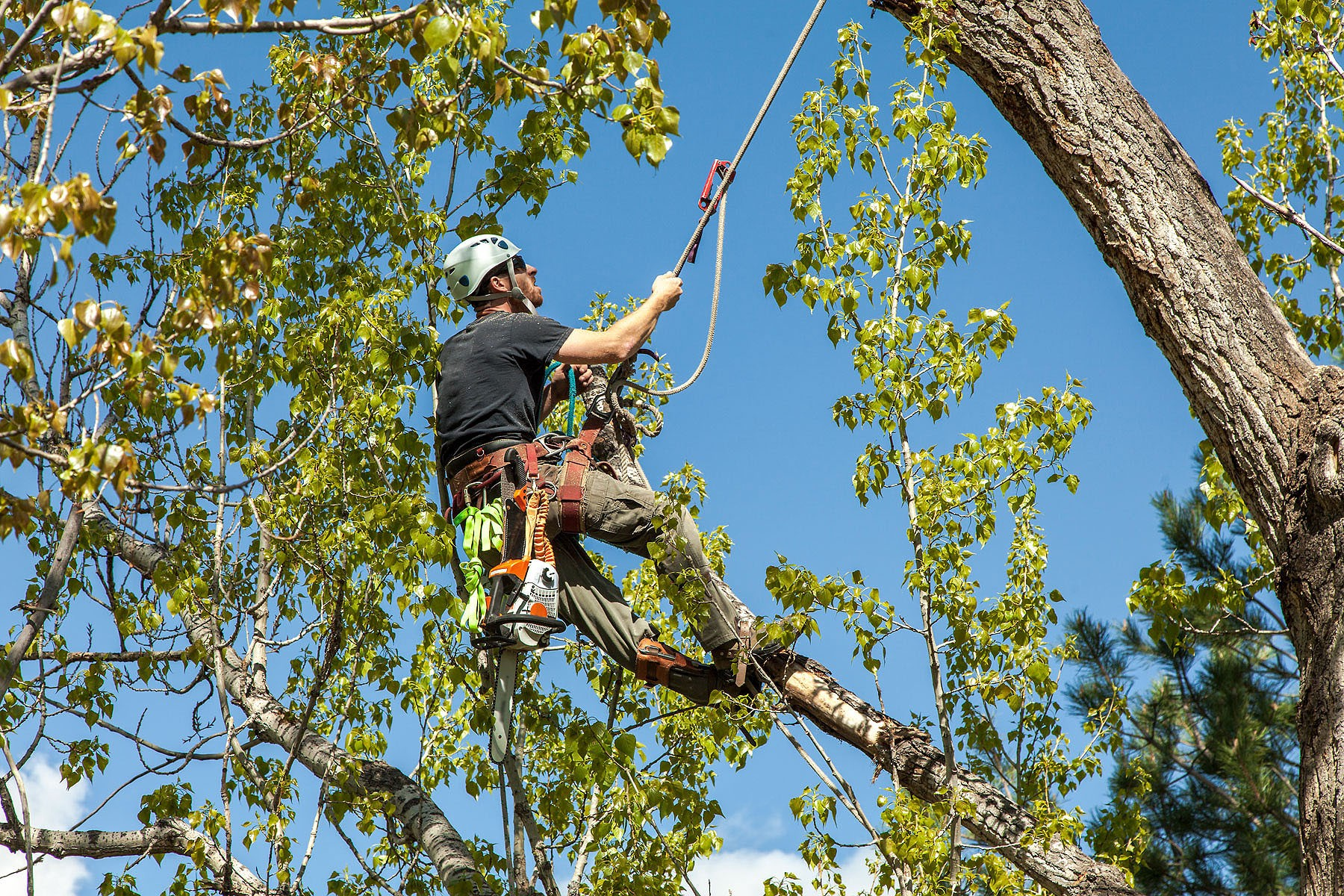 Image result for Different Kinds Of Tree Services