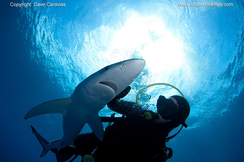 Shark dreams: what do they mean? - Tamsin - Medium
