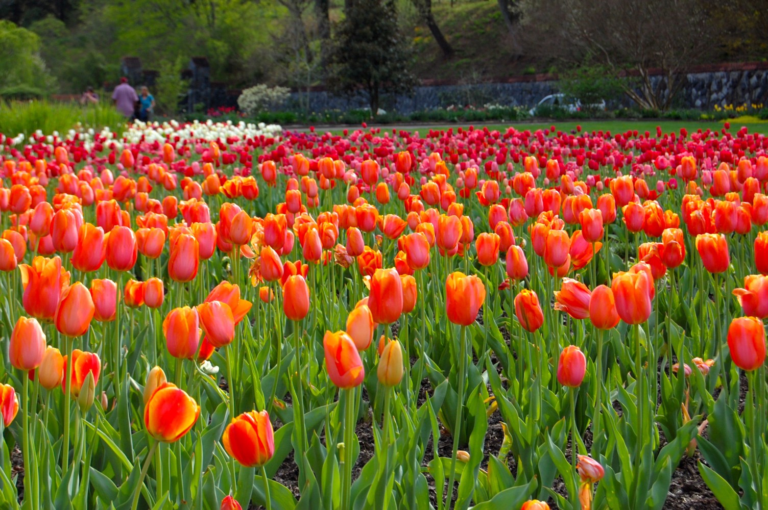 Is Bitcoin the new tulip mania? - Look Ma, I'm Blogging!