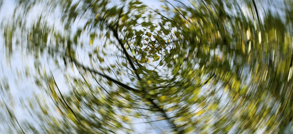 Blurry photo looking up at a tree branch and green leaves.