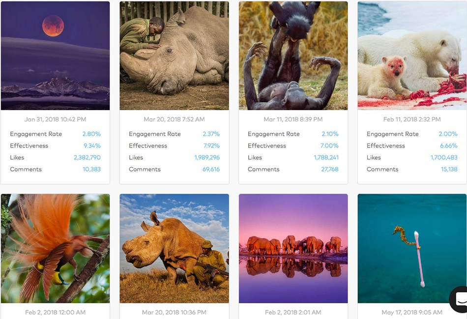 National Geographic: King of the Instagram Jungle - Dash