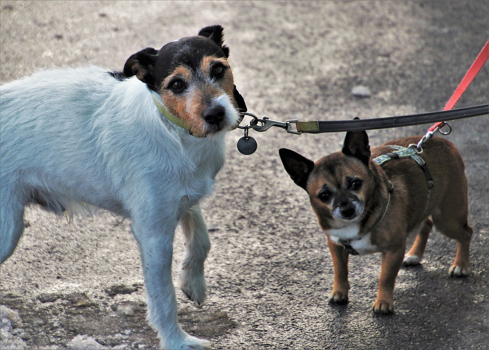 How To Stop Your Dog From Pulling The Leash