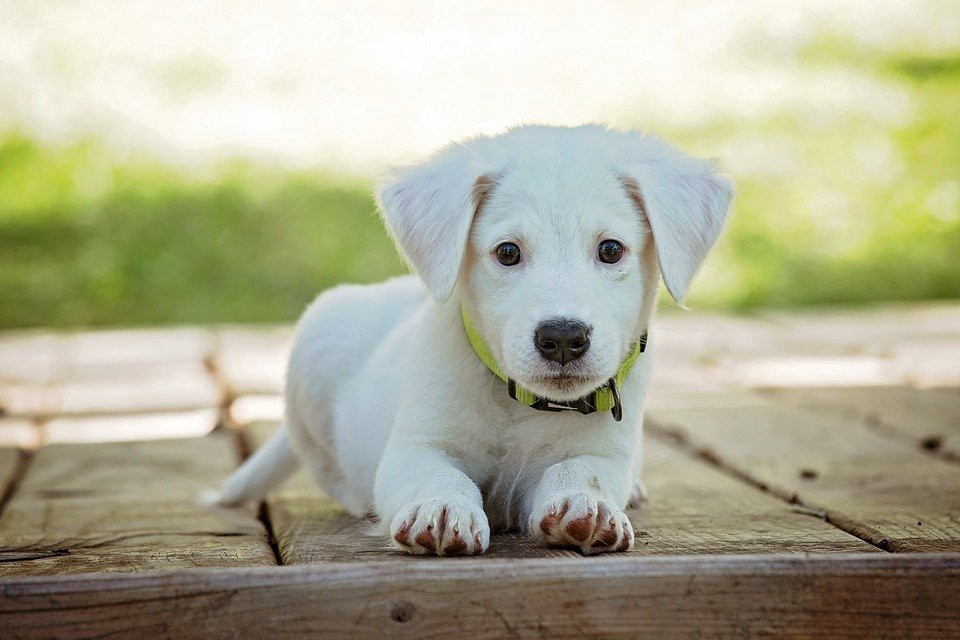 How to Stop a Puppy From Whining