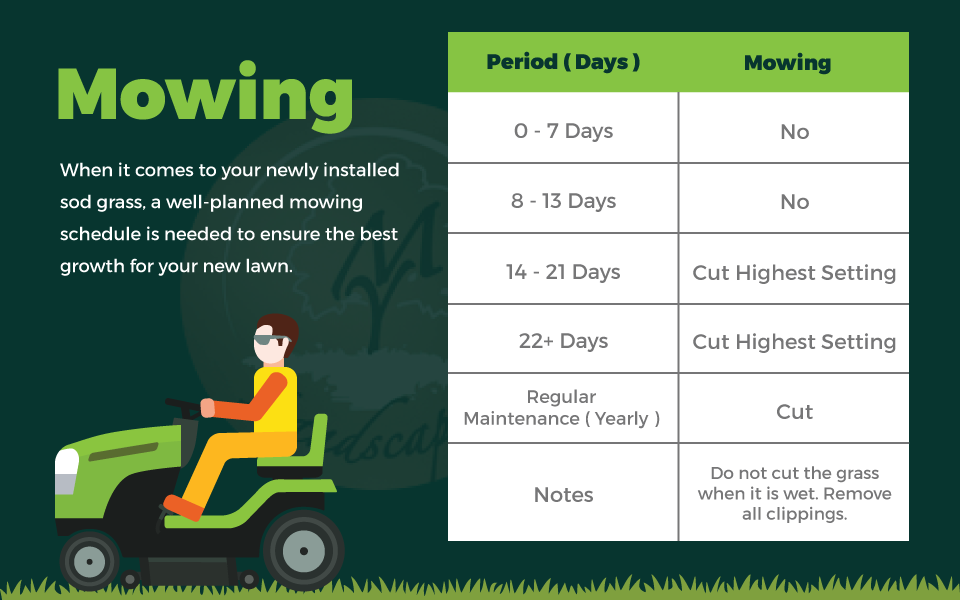 Cheatsheet Taking Care Of Your New Sod Grass From Day 1 To Yearly Maintenance By My Landscapers Medium
