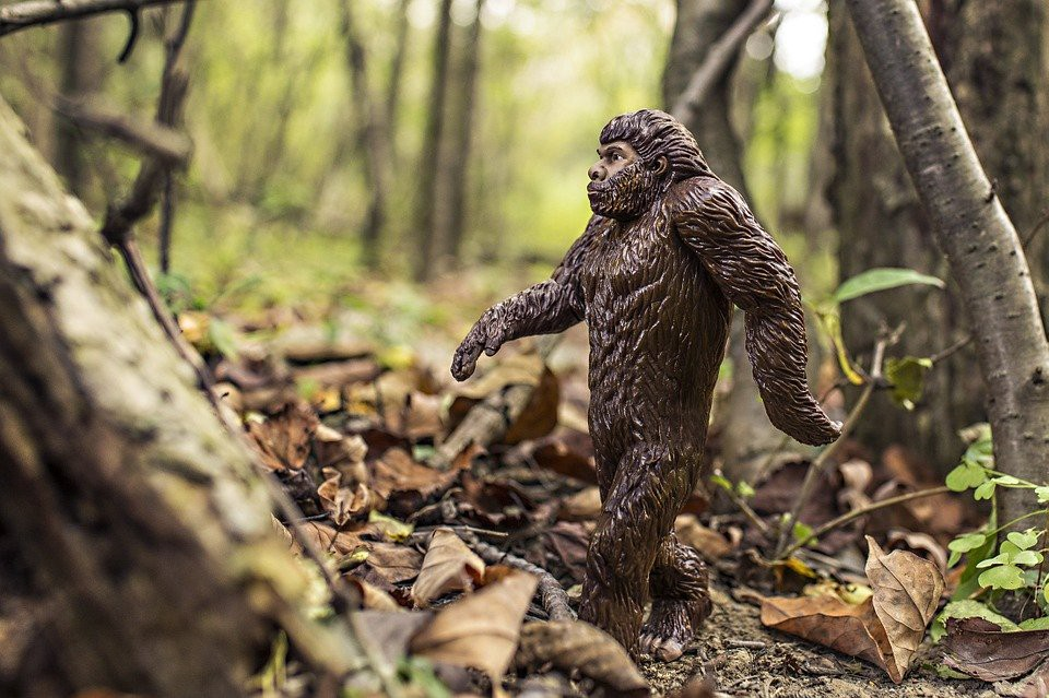 Photo of Bigfoot for Machine Learning Image Recognition