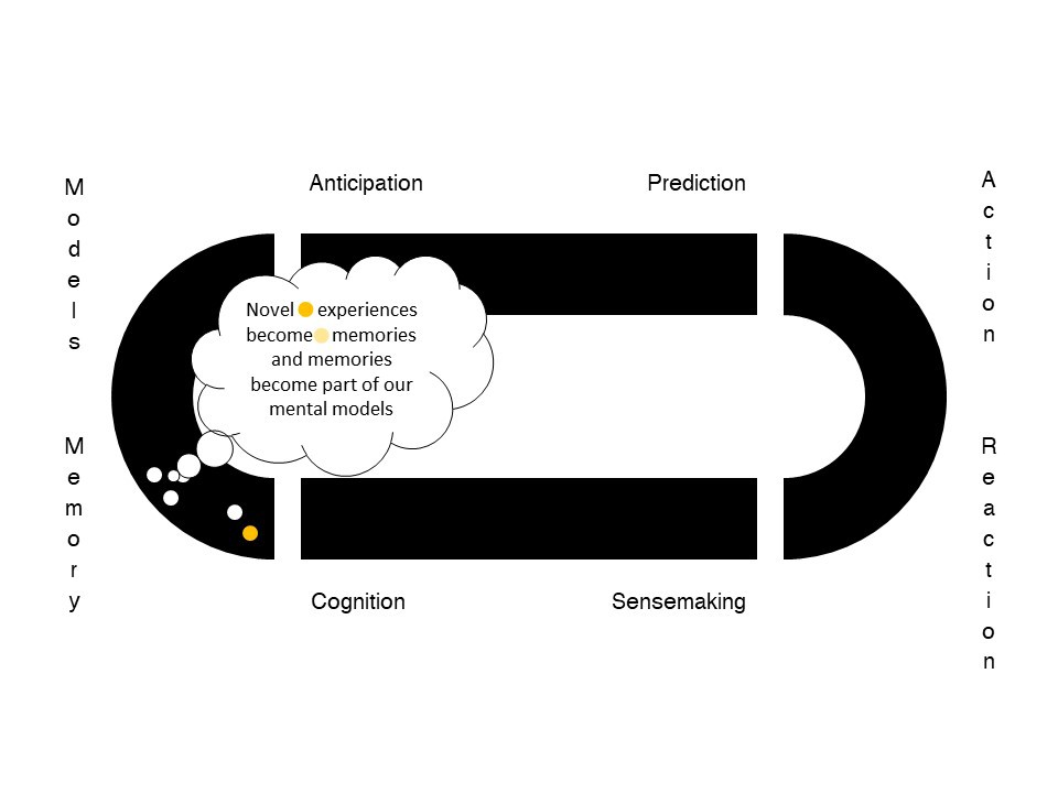 Memory: Novel experiences become memories and become part of out mental models