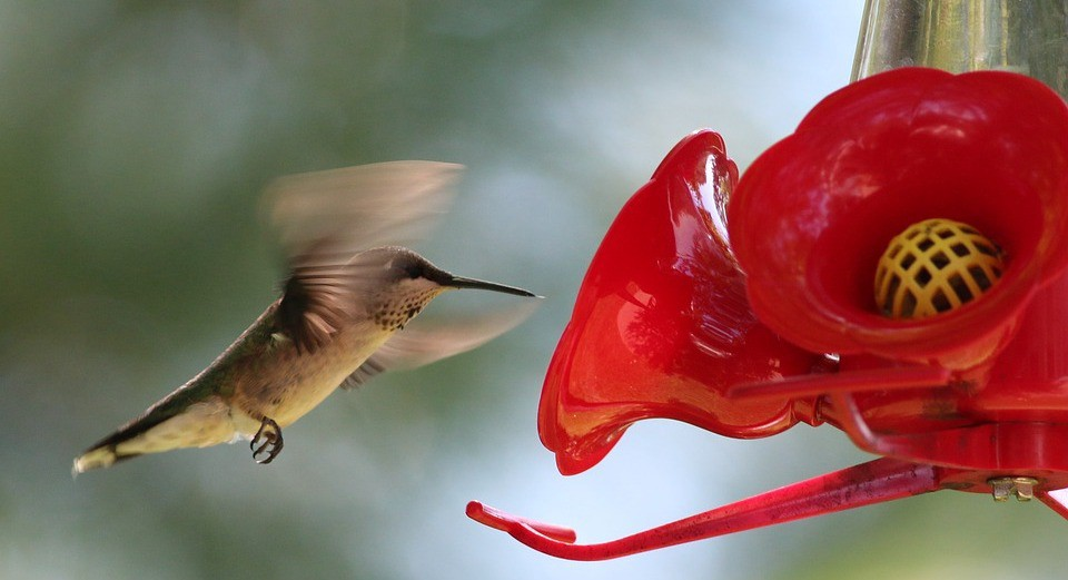 How to Infiltrate the Weird World of Birdwatching - The