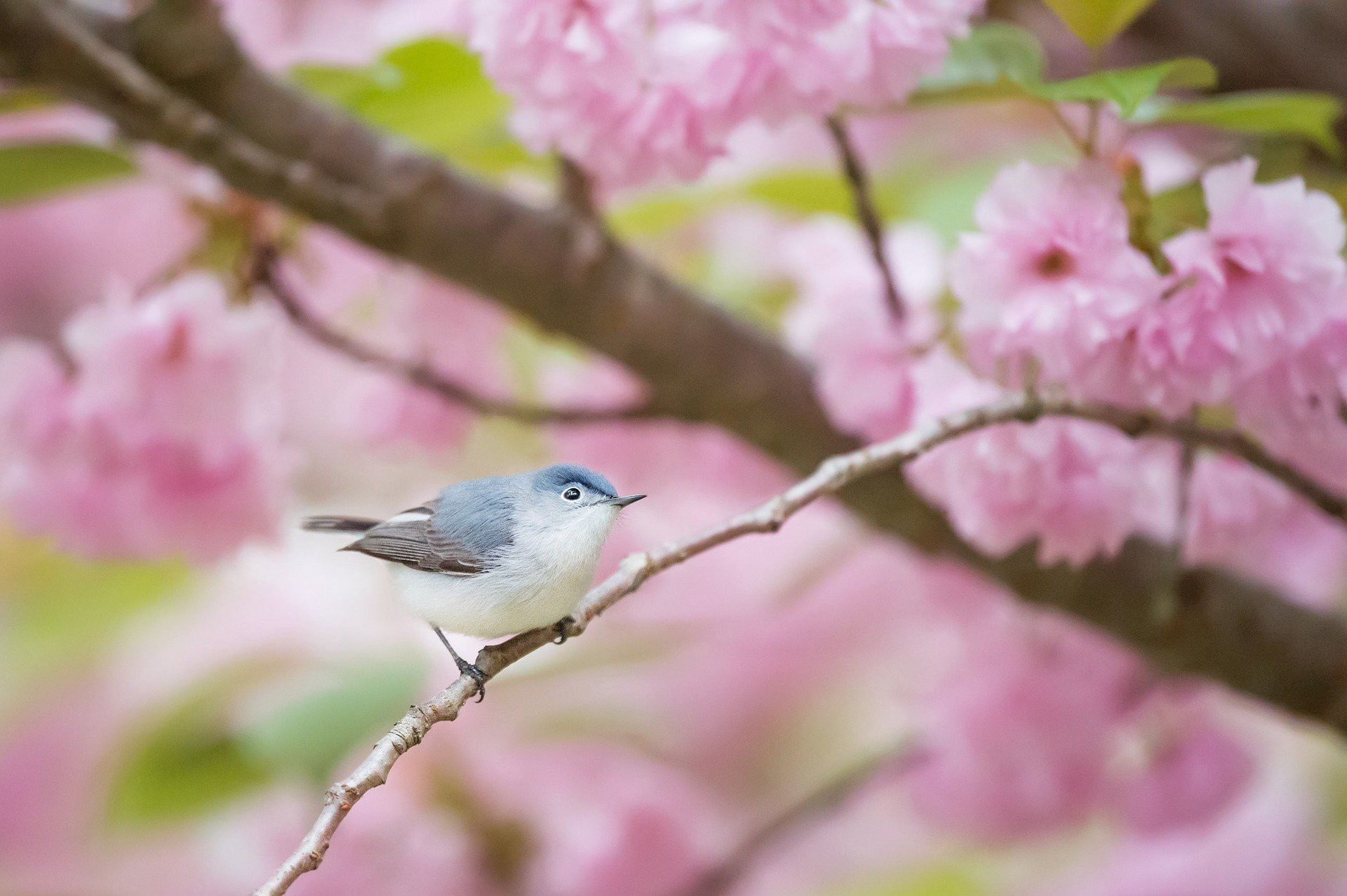 bird and pin flowers