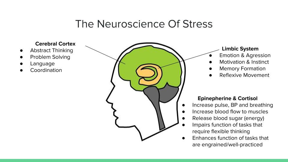 Stress Makes You Stupid The Neuroscience Of Survival