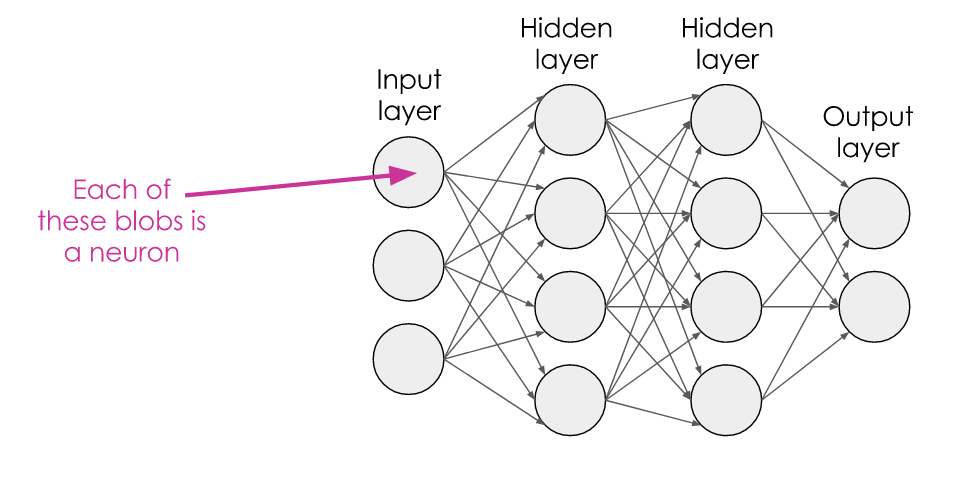 A 4-layer network, with circles representing neurons, connected by arrows