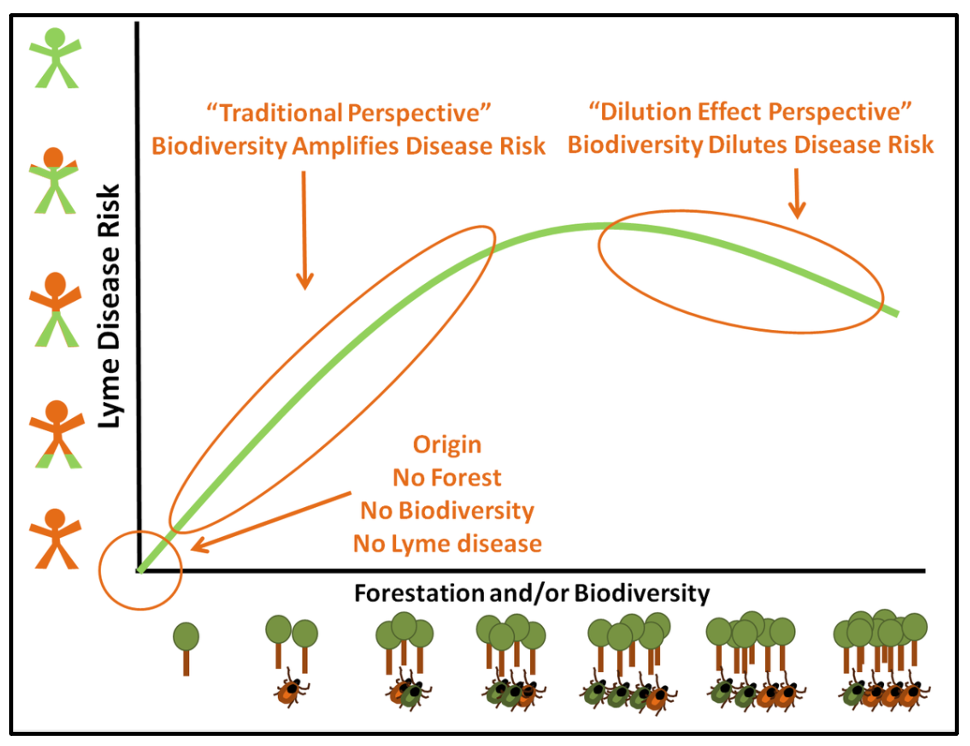 This hypothetical graph illuminates the biodiversity-disease relation in the case of Lyme disease.