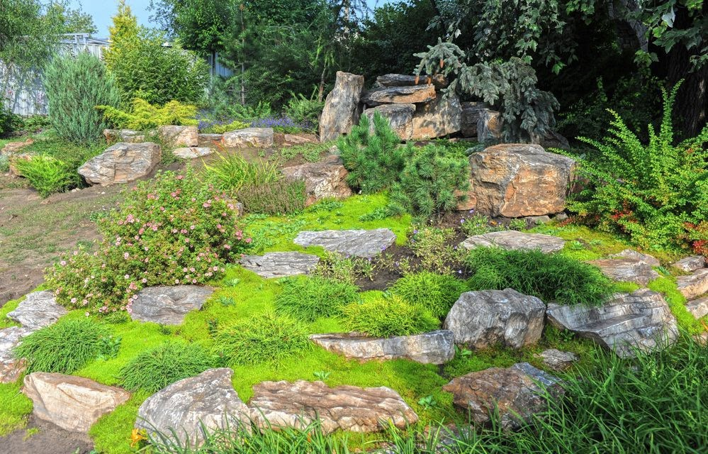 Top 10 Lawn Alternatives With Low Maintenance