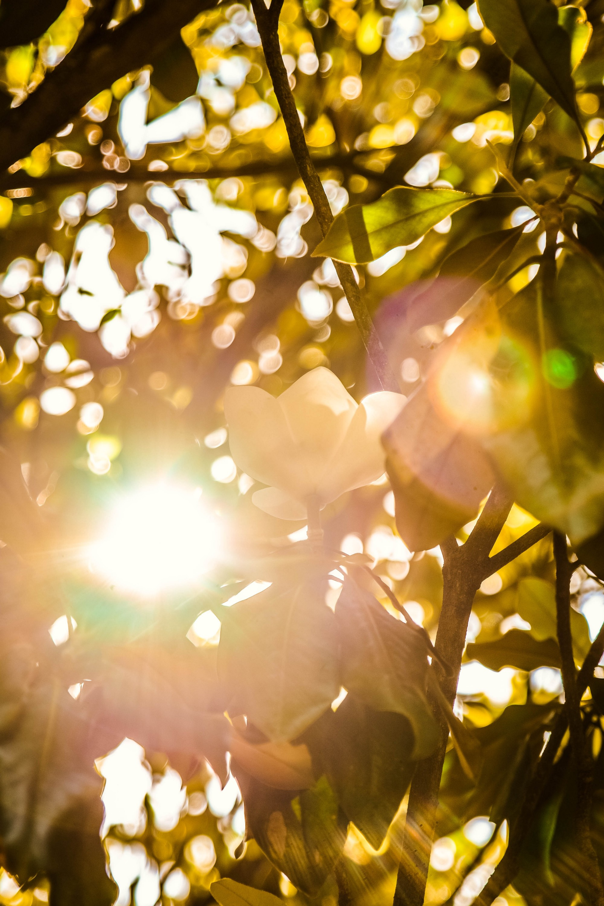 Sunlight beaming through branches of a tree, highlighting golden, pink, green colors.