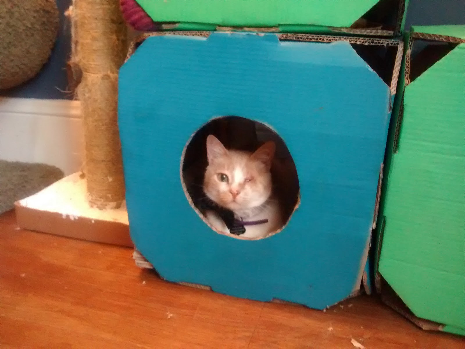 Create recycled cat furniture for your pets