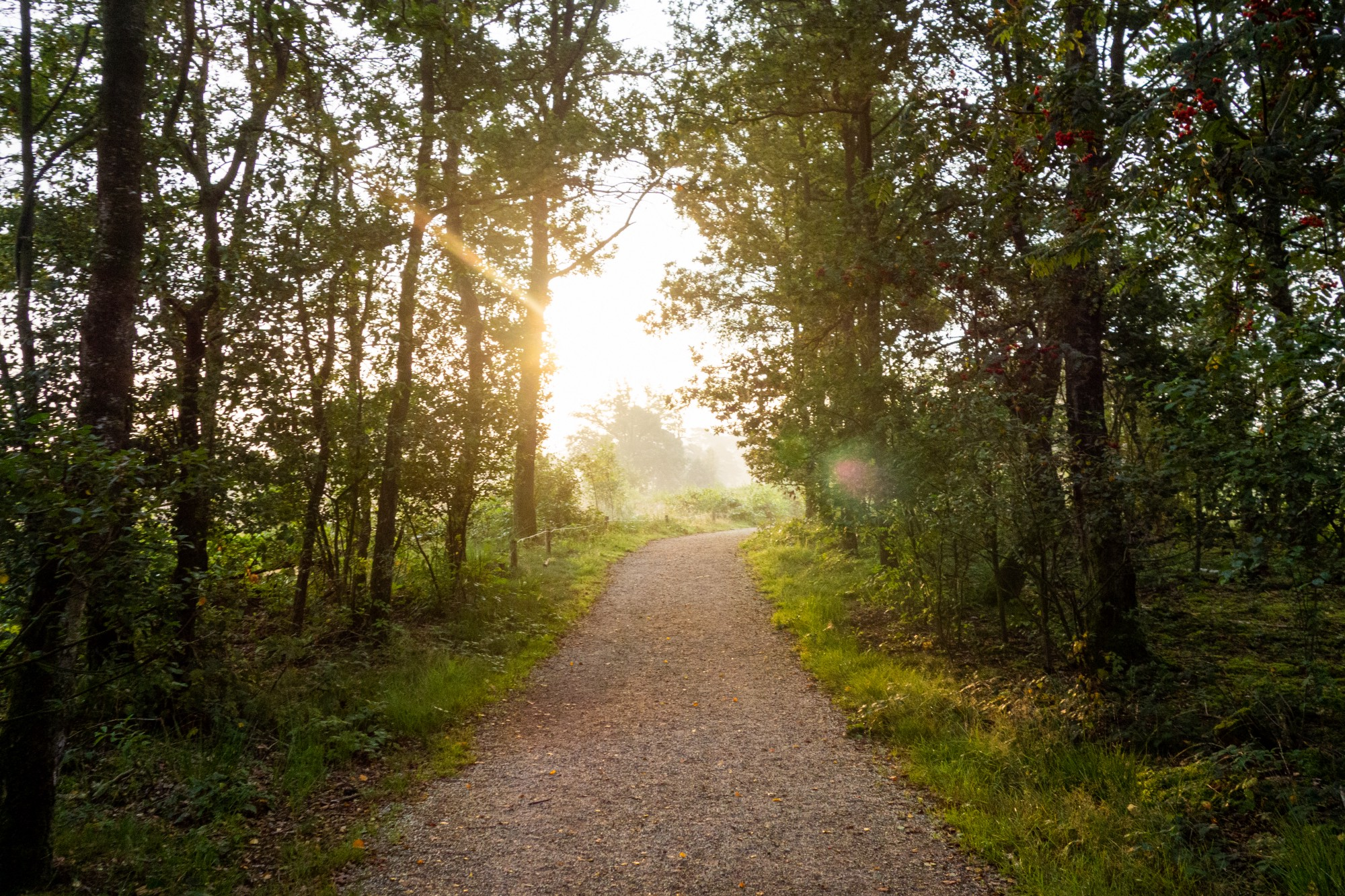 Narrow road lined with tall trees on both sides, leading to open area of sunshine that's sure to make you smile.