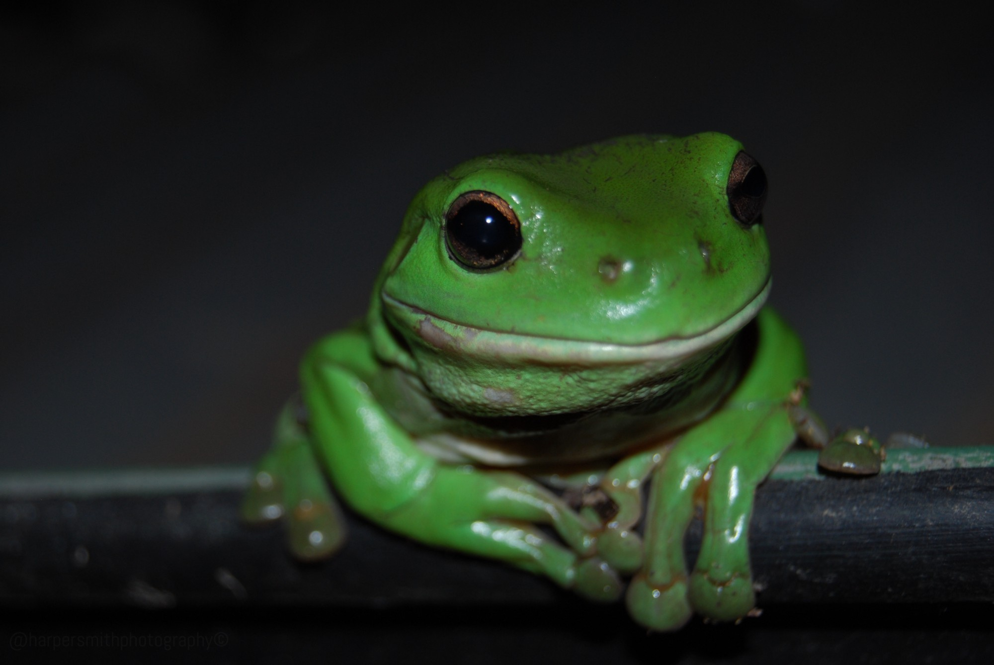 A picture of a green frog, representing Screaming frog's logo