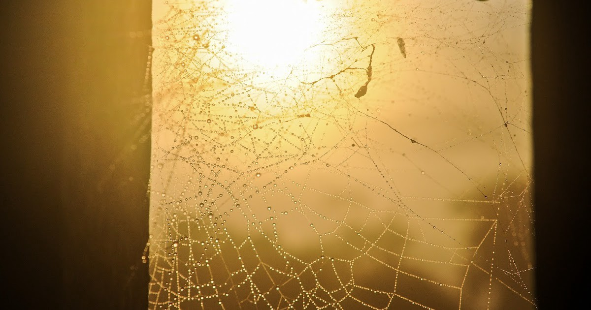 Photo of sunlight shining through a window covered with spiderwebs