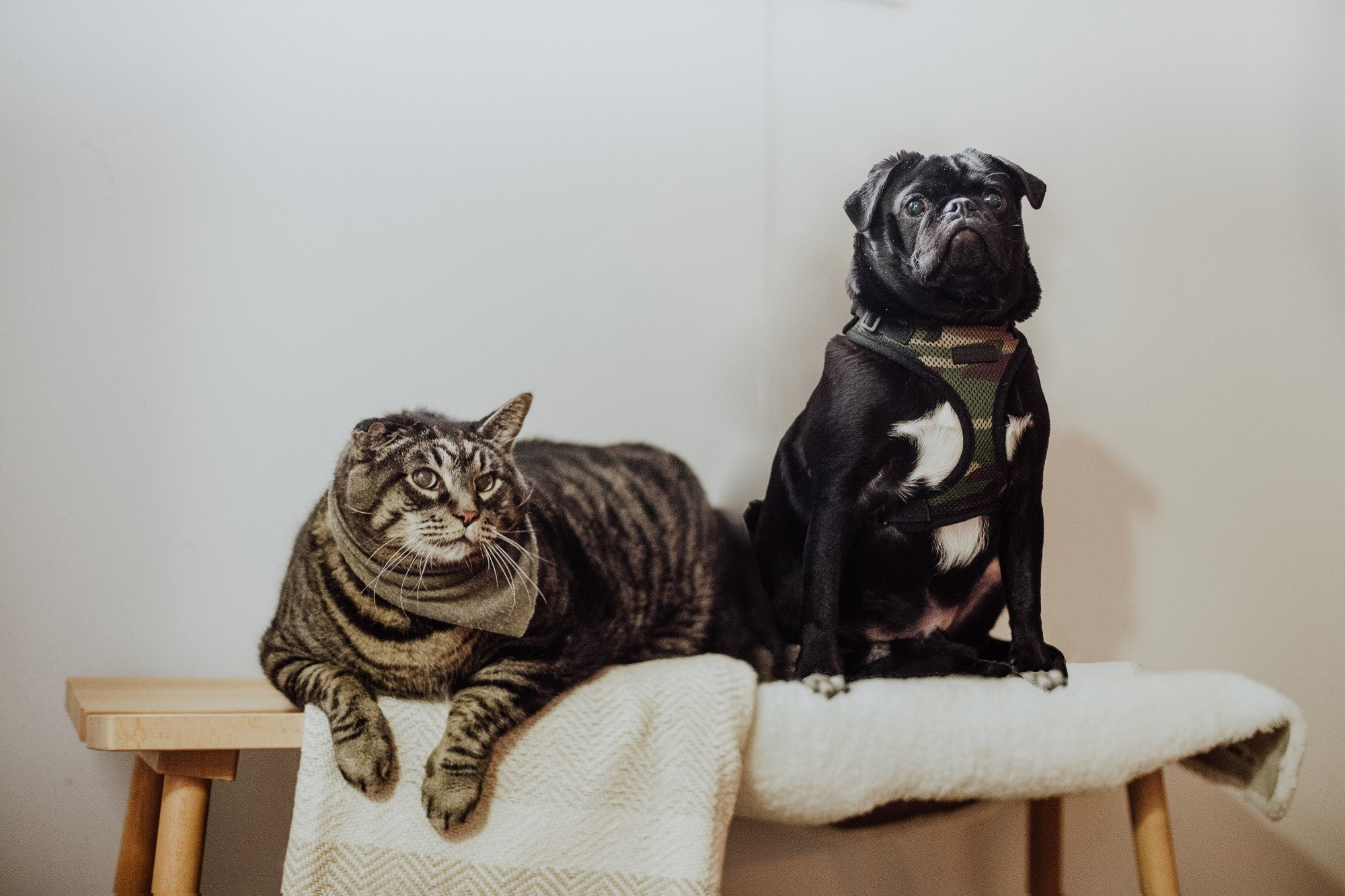 pets on ironing board