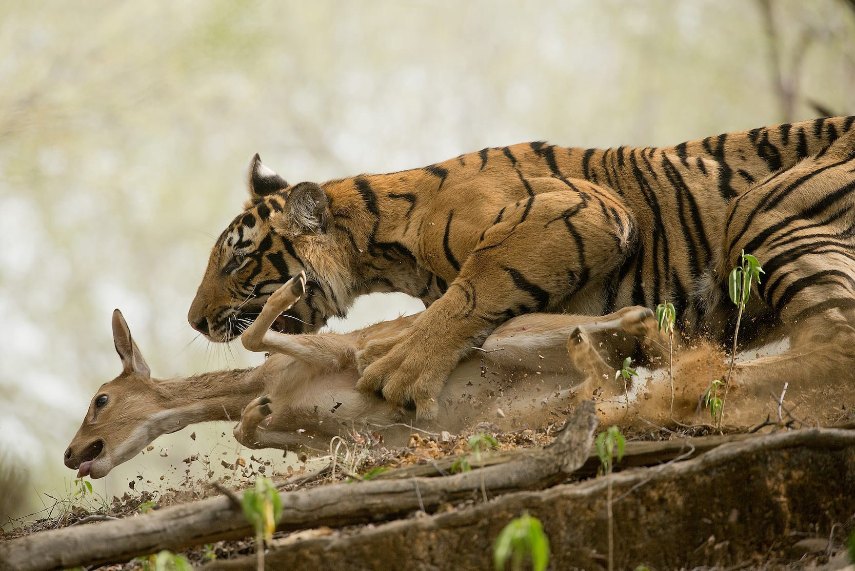 """1) """"The First Catch"""" by Shivang Mehta"""