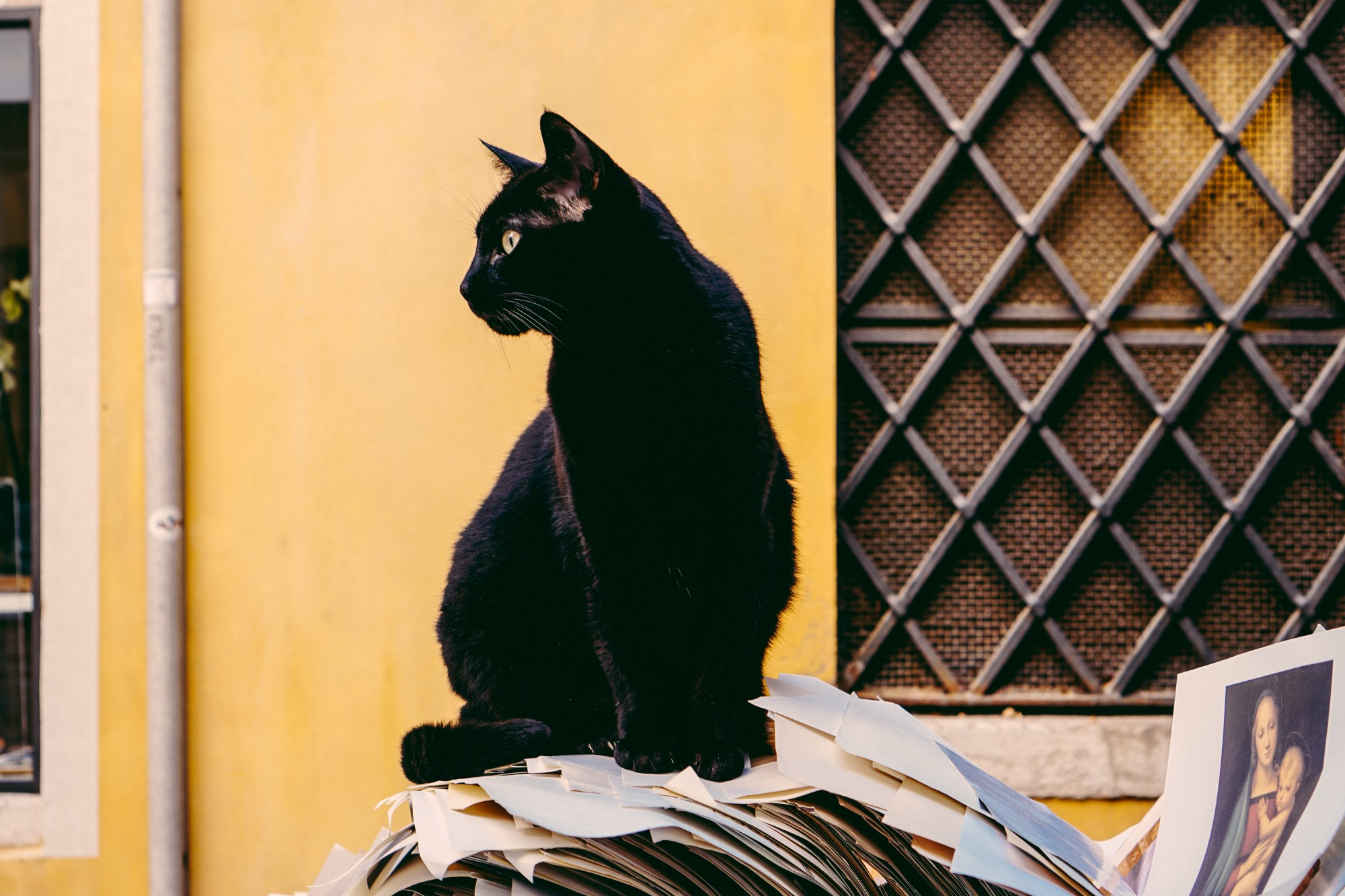 A cat sitting on top of a pile of newspapers, against a yellow city wall