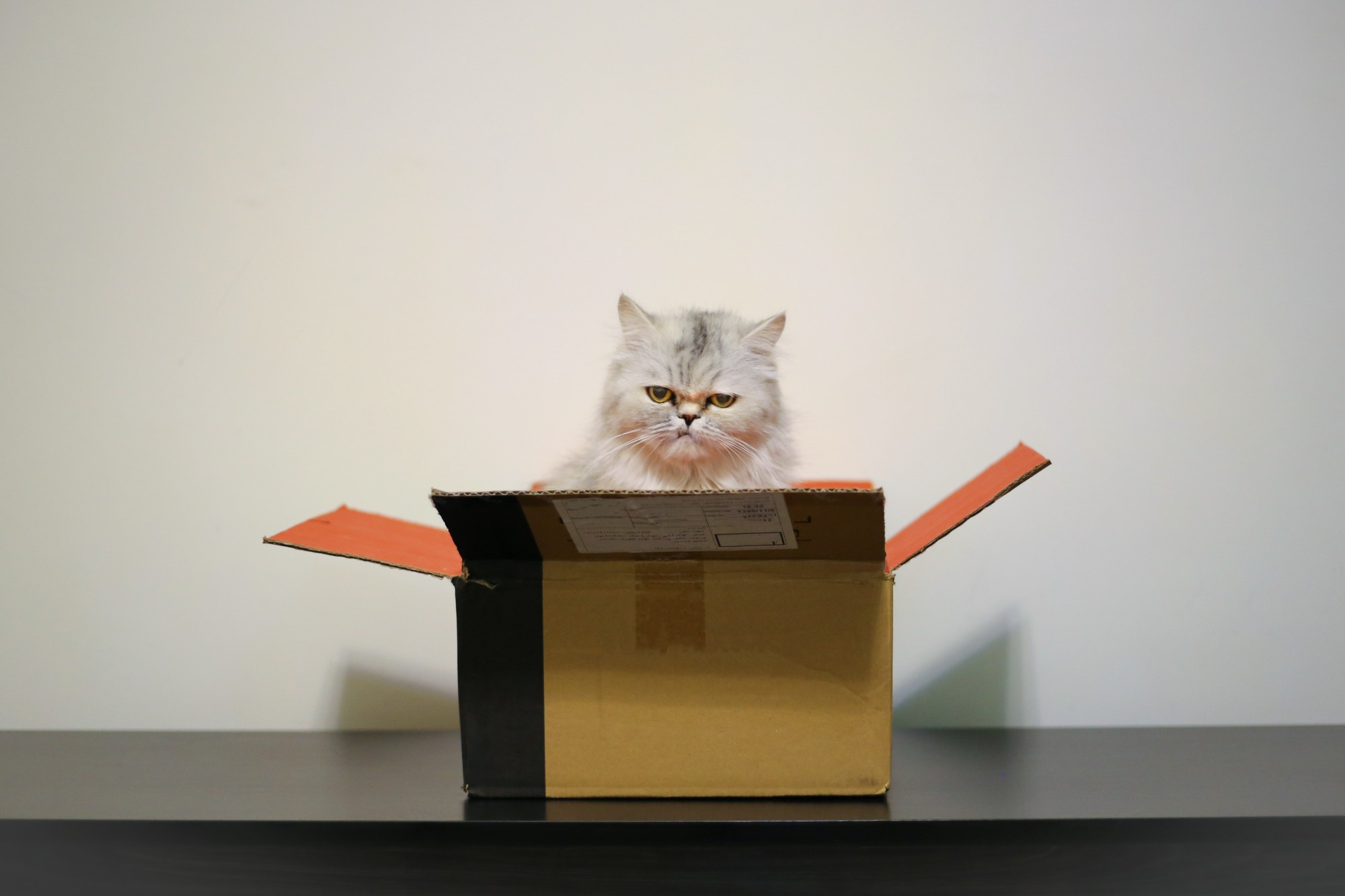 CSS Box Model: 5 Steps To Turn an Element into a Box