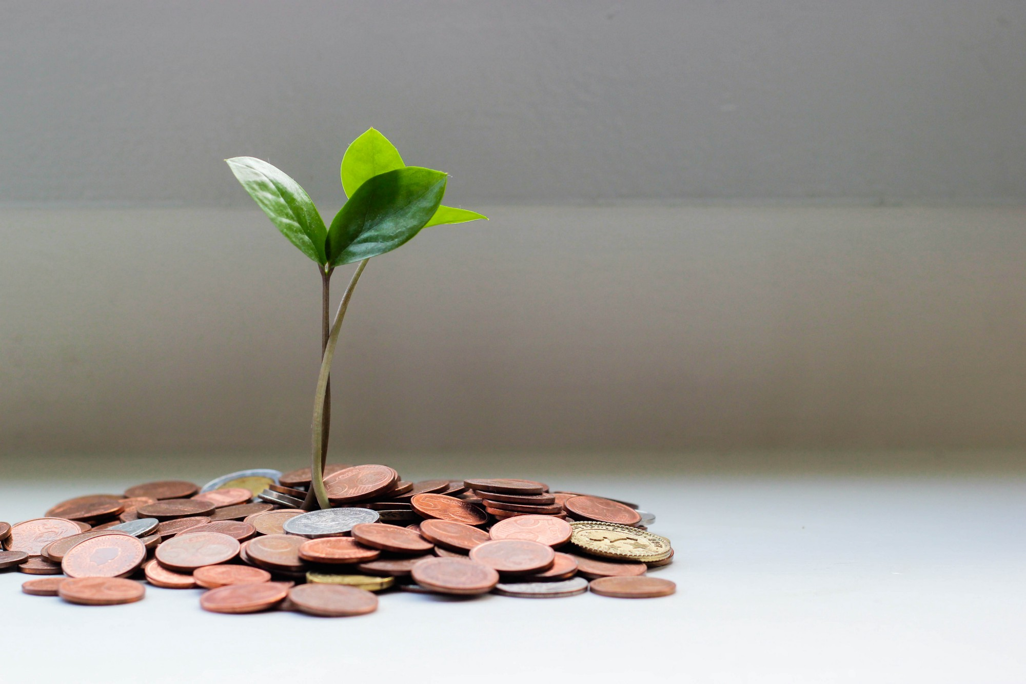 A plant grows out of some coins