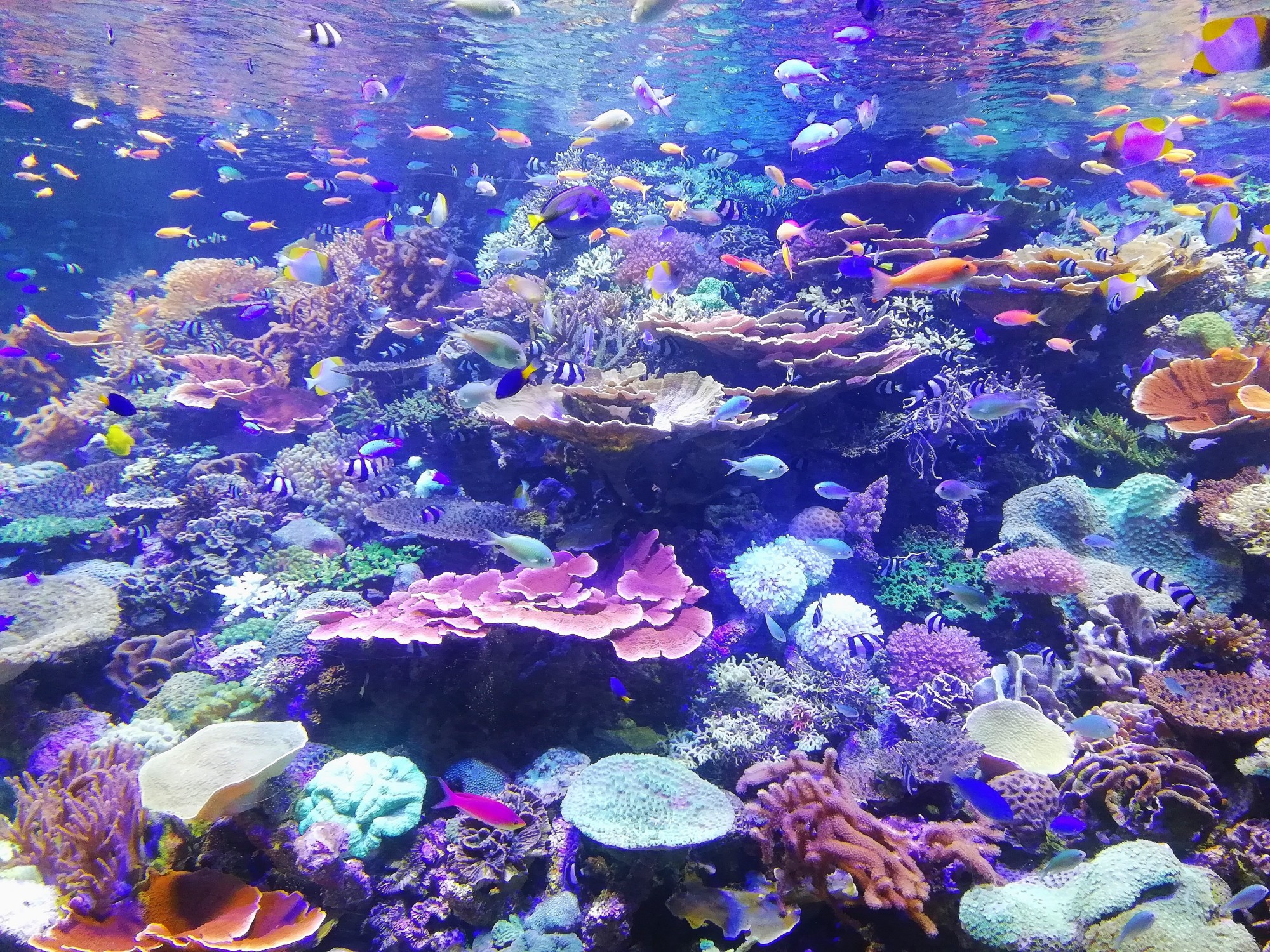 colorful photograph of a coral reef teeming with fish and multicolored aquatic plants and coral