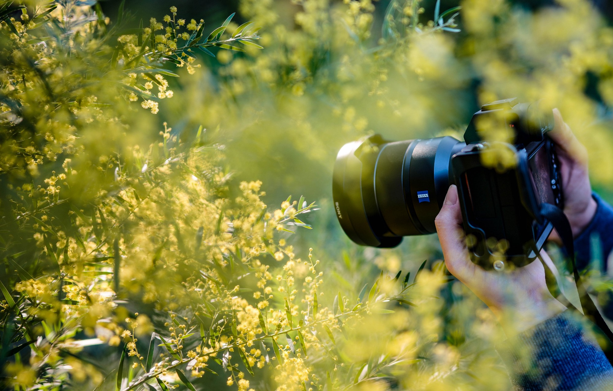 Image of a person holding a camera, photographing flowers