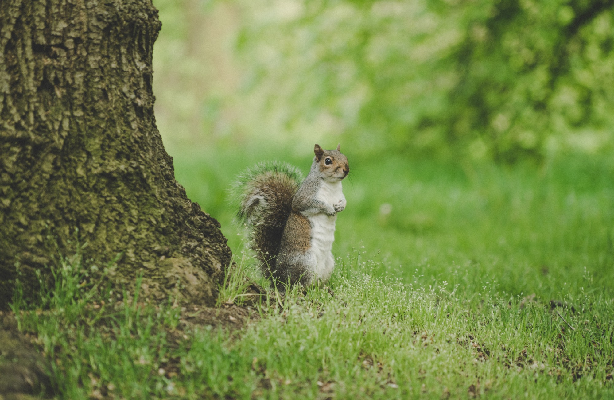 a squirrel is waiting under a tree