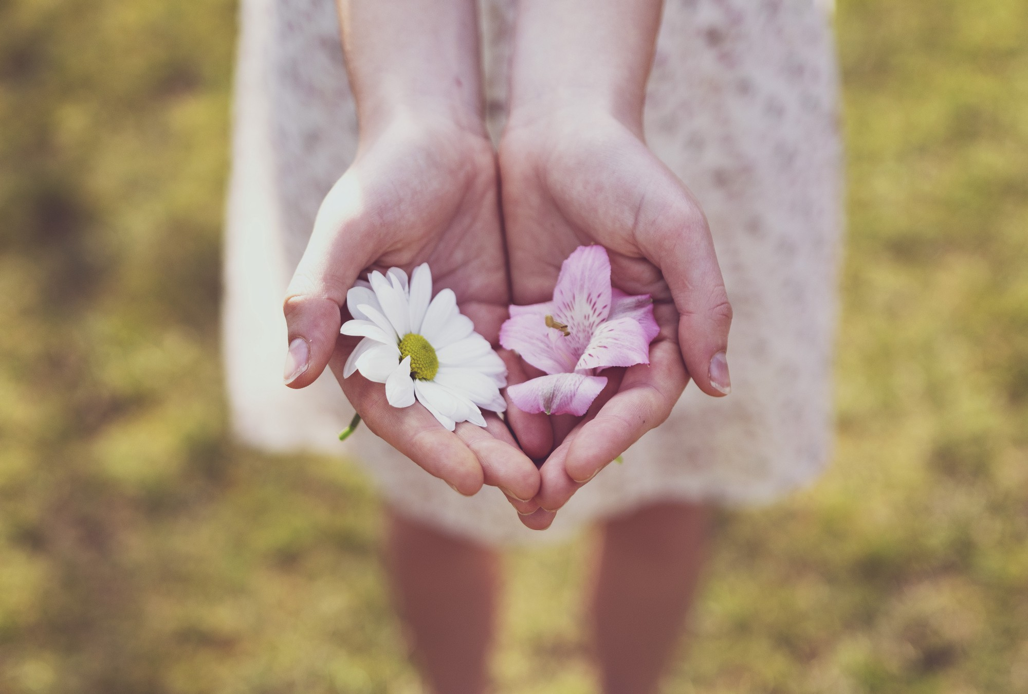 Woman's hands cupped together holding flower petals.