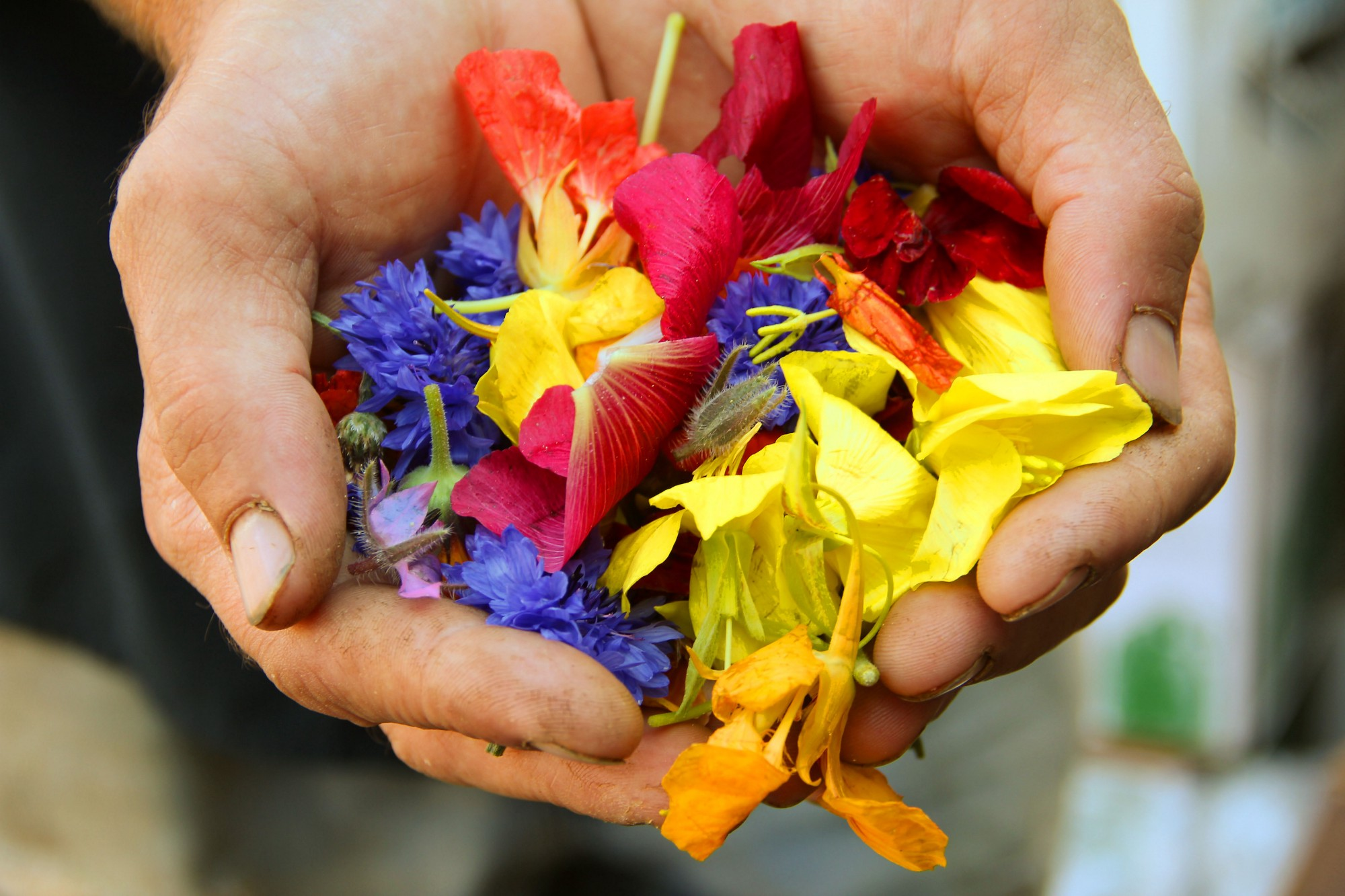 Hands offering flowers to someone.