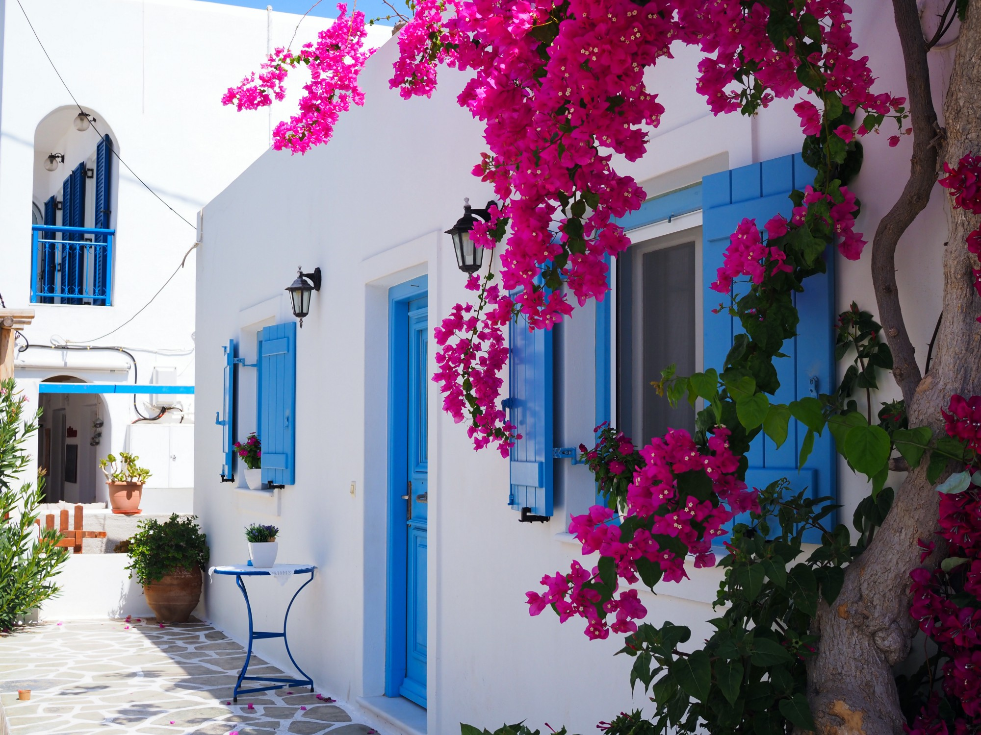 White buildings with blue wood doors and window shutters and a pink bougainvilla in the foreground.